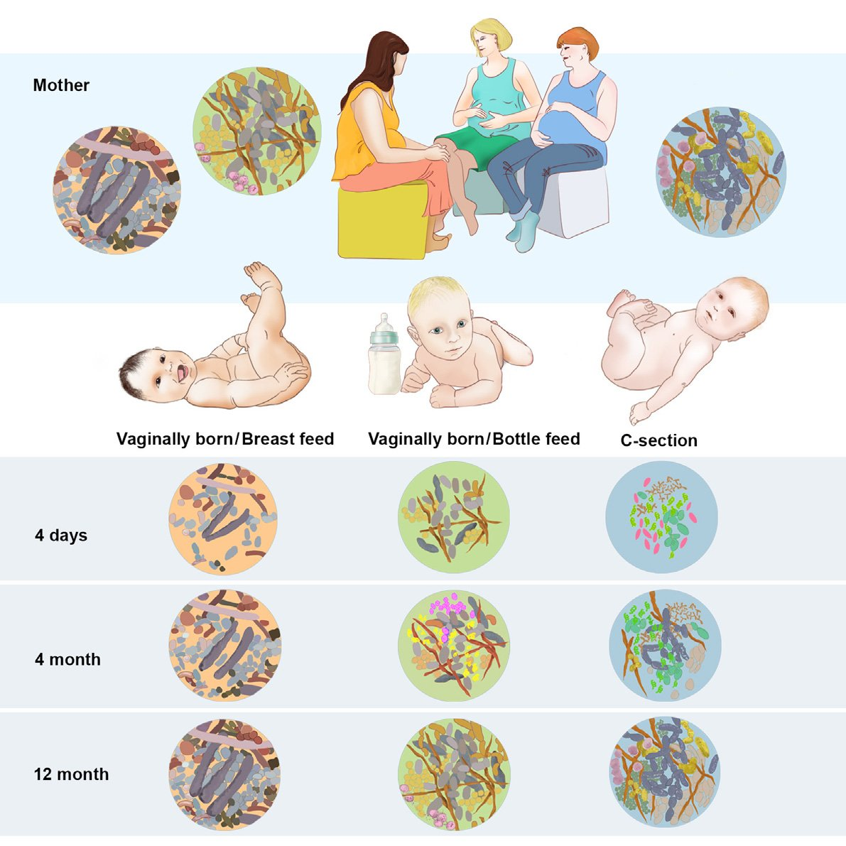 institutovillamil-microbiomaaleitamentomaterno